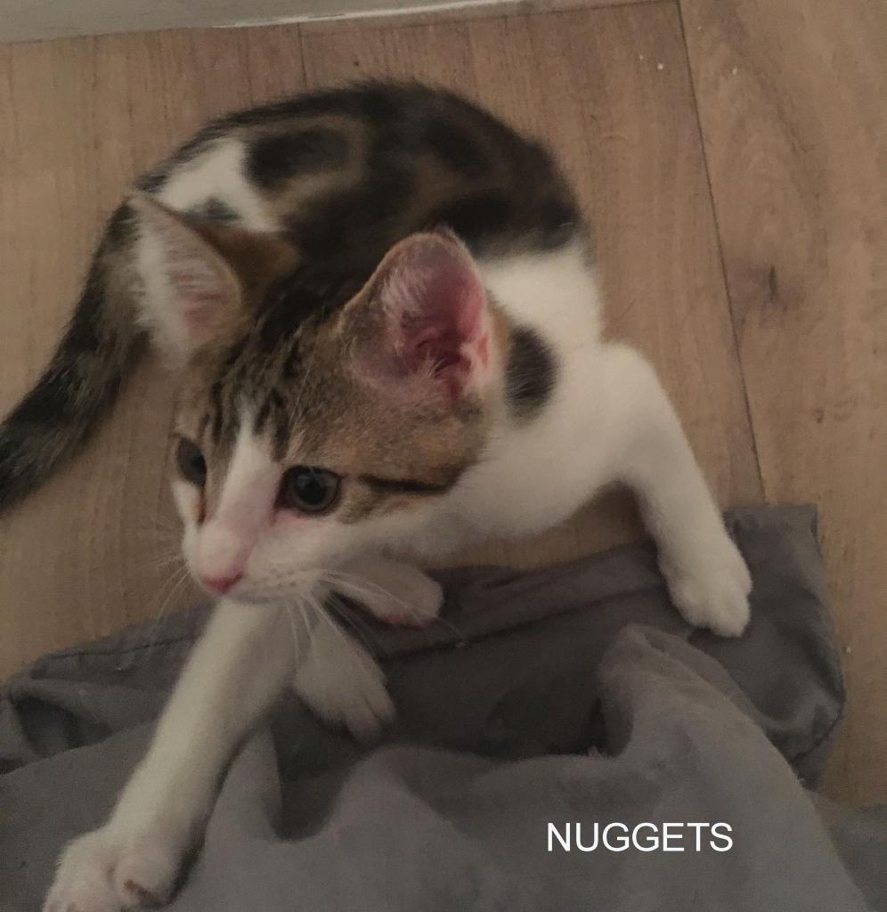 NUGGETS - M - Né le 20/04/2017 - Adopté en Juillet 2017