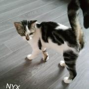 NYX - F - Née le 01/02/2017 - Adoptée en Juillet 2017