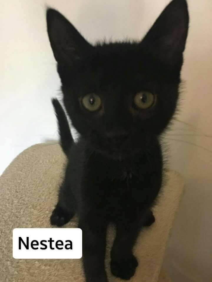 NESTEA - M - Né le 01/04/2017 - Adopté en Juillet 2017