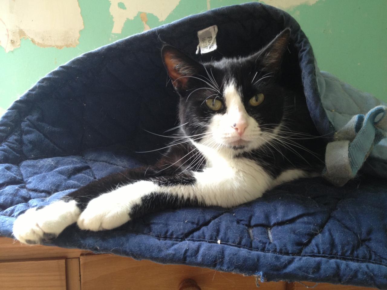 BILLIE - F - Née le 06/10/012 - Adoptée en Octobre 2014