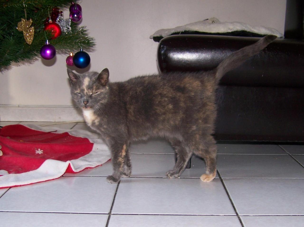 BISTY - F - Née en Novembre 2007 - Adoptée en Fevrier 2014