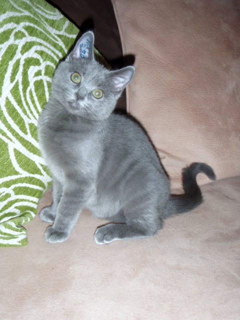 Douce - Adoptée en janvier 2012