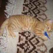 ELVIN - Né le 01/08/2009 - Adopté en Octobre 2009