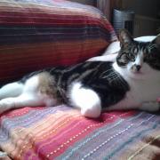 FLIRT - F - Née le 15/05/2010 - Adoptée en Novembre 2010