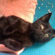 G VIOLAITE - F - Née le 25/07/2011 - Adoptée en Octobre 2011