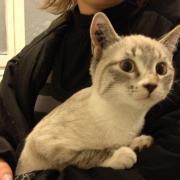 GABINE - Née le 14/08/2011 -Adoptée en Octobre 2011