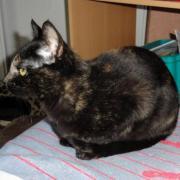 Gaïska - Adoptée en janvier 2012