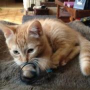 GALIUS - M - Né le 10/10/2011 - Adopté en janvier 2012