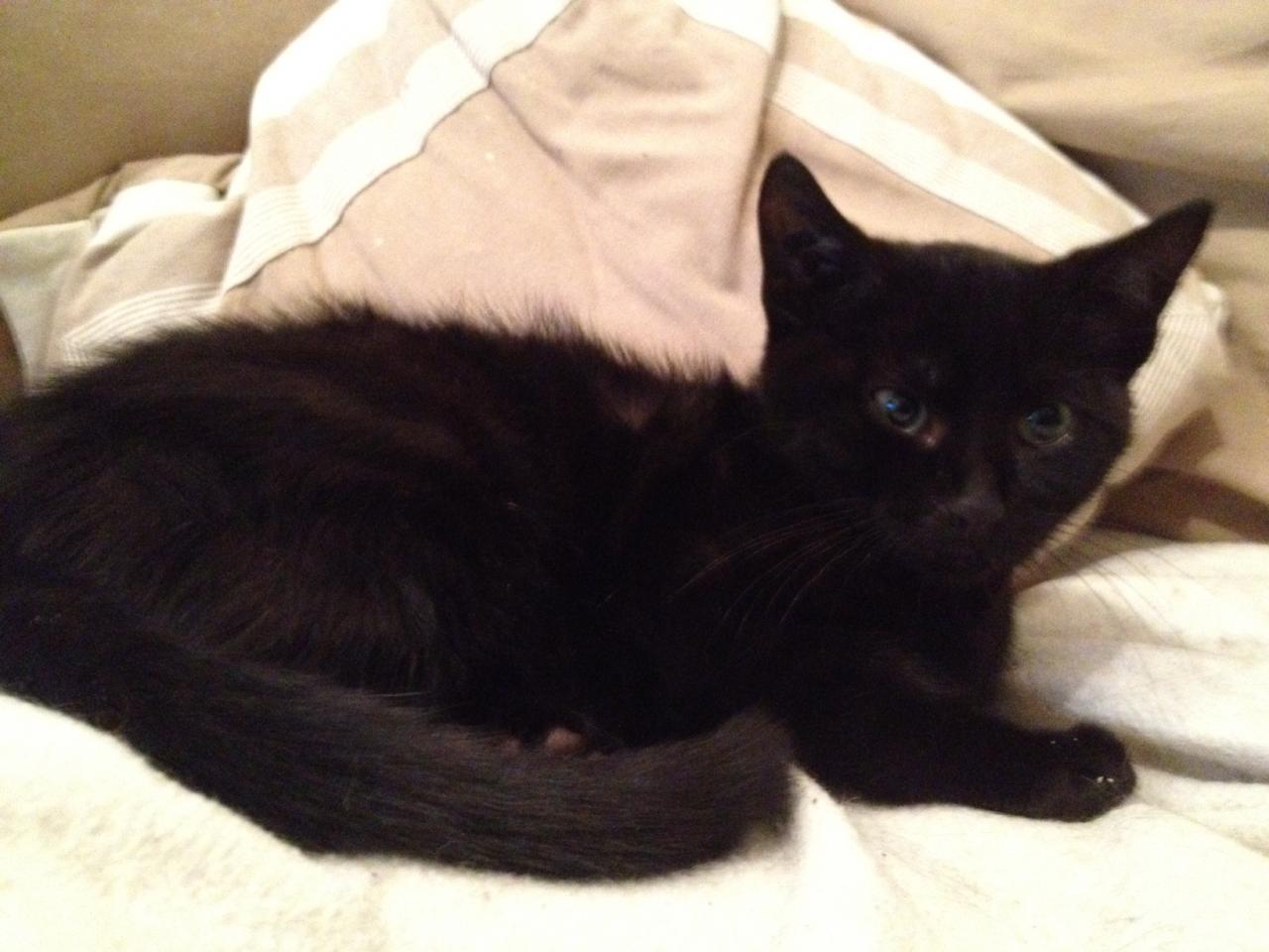 GALLIBIER - M - Né le 20/09/2011 - Adopté en Fevrier 2012