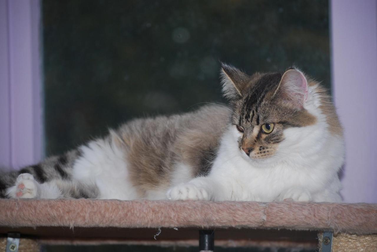 GALLIE - F - Née le - Adopté en Novembre 2011
