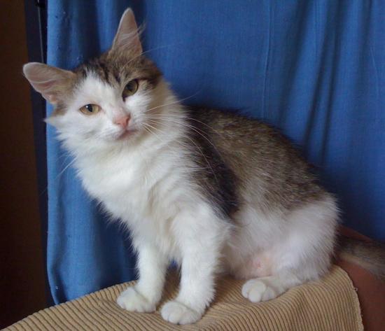Gamete - Née en avril 2010 - Adoptée en décembre 2011