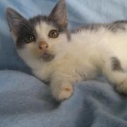 GANDALF - M - Né le 18/09/2011 - Adopté en decembre 2011