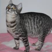 GANDJA - M - né en 2011 - Adopté en novembre 2011