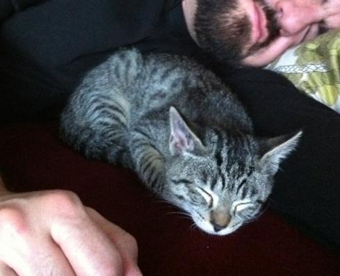 GARFIELD V - M - Né le 30/08/2011 - Adopté en Novembre 2011