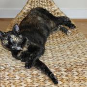 GARGOTTE - F - Née le 15/07/2011 - Adoptée en Avril 2012