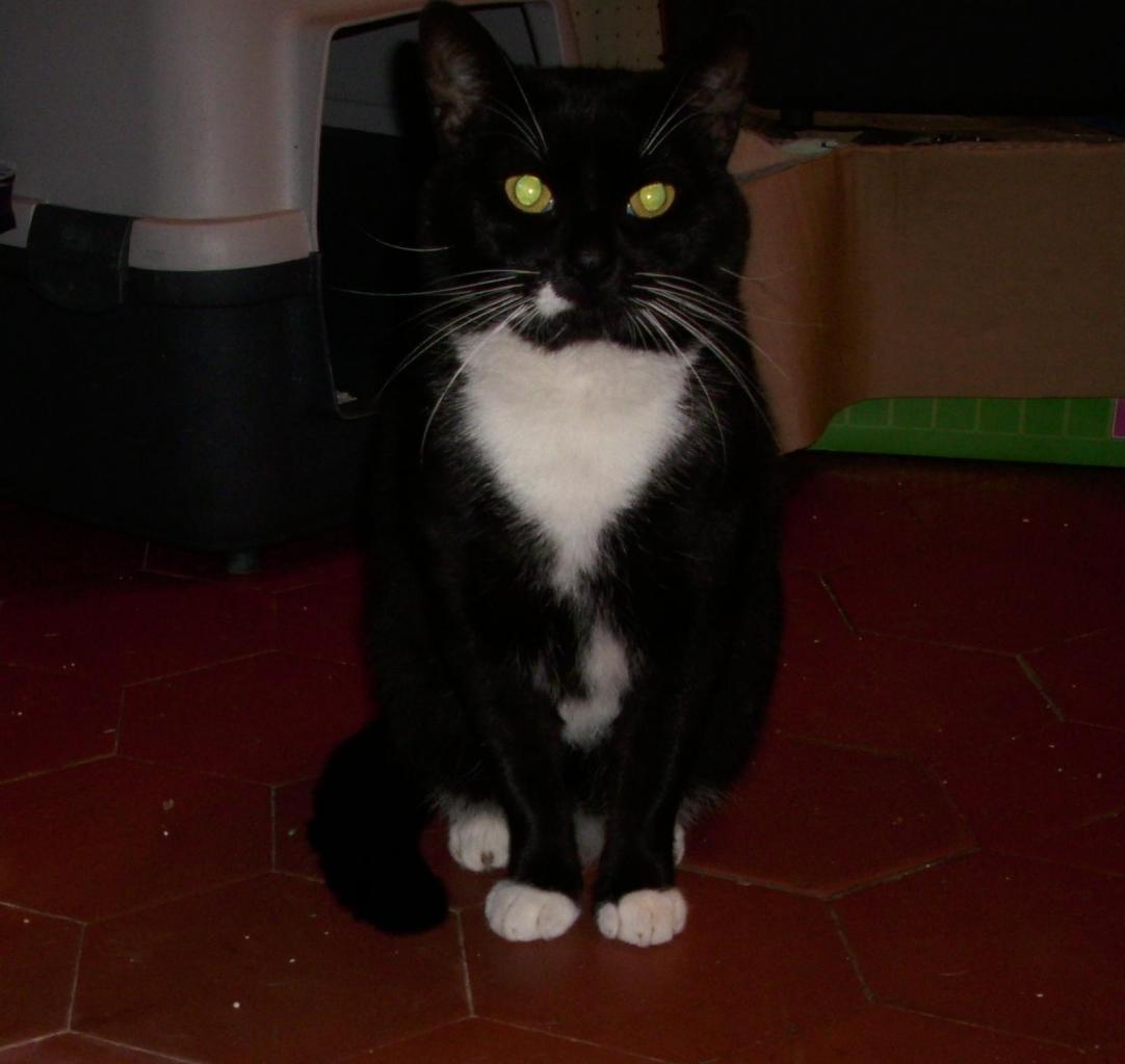GARRY - M - Né en mai 2008 - Adopté en decembre 2011