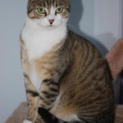 GARVIN - M - Né en 2011 - Adopté en novembre 2011