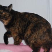 GATINIA - F - Née le - Adopté en Novembre 2011