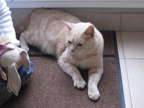 GAYOS - M - Né en novembre 2010 - Adopté en Novembre 2011