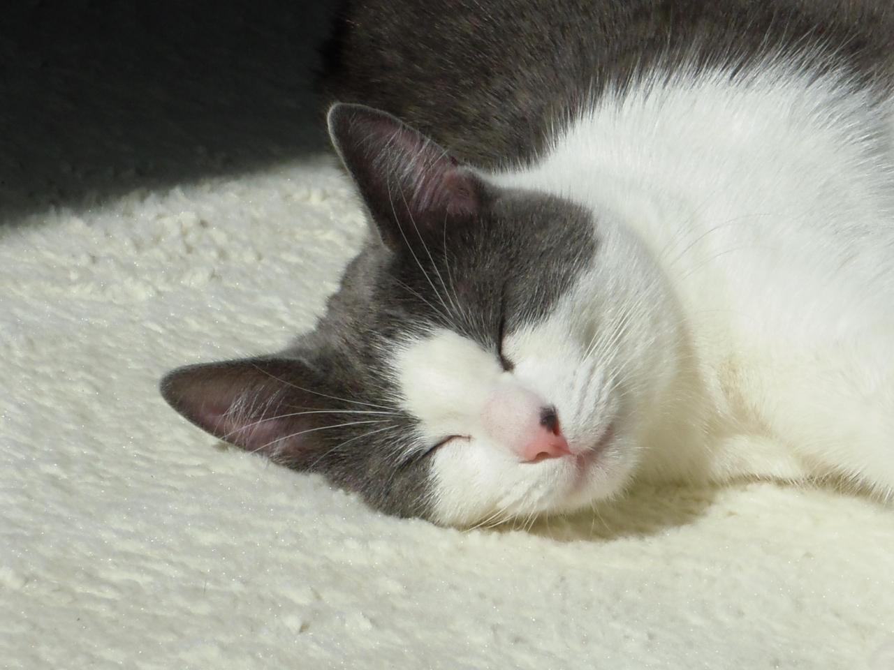 GAZOU - M - Adopté en Septembre 2011