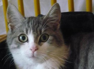 GD TRESOR - M - Né en mai 2011 - Adopté en decembre 2011