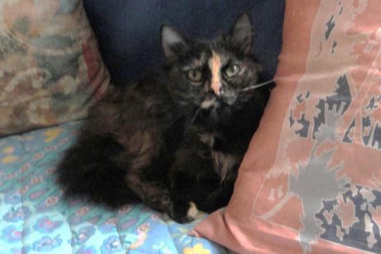 GEISHA - F - Née mars 2011 - Adoptée en Fevrier 2012