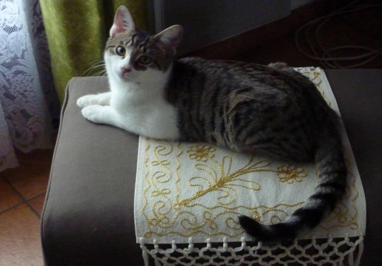 GERMIN - M - Né le 25/06/2011 - Adopté en decembre 2011