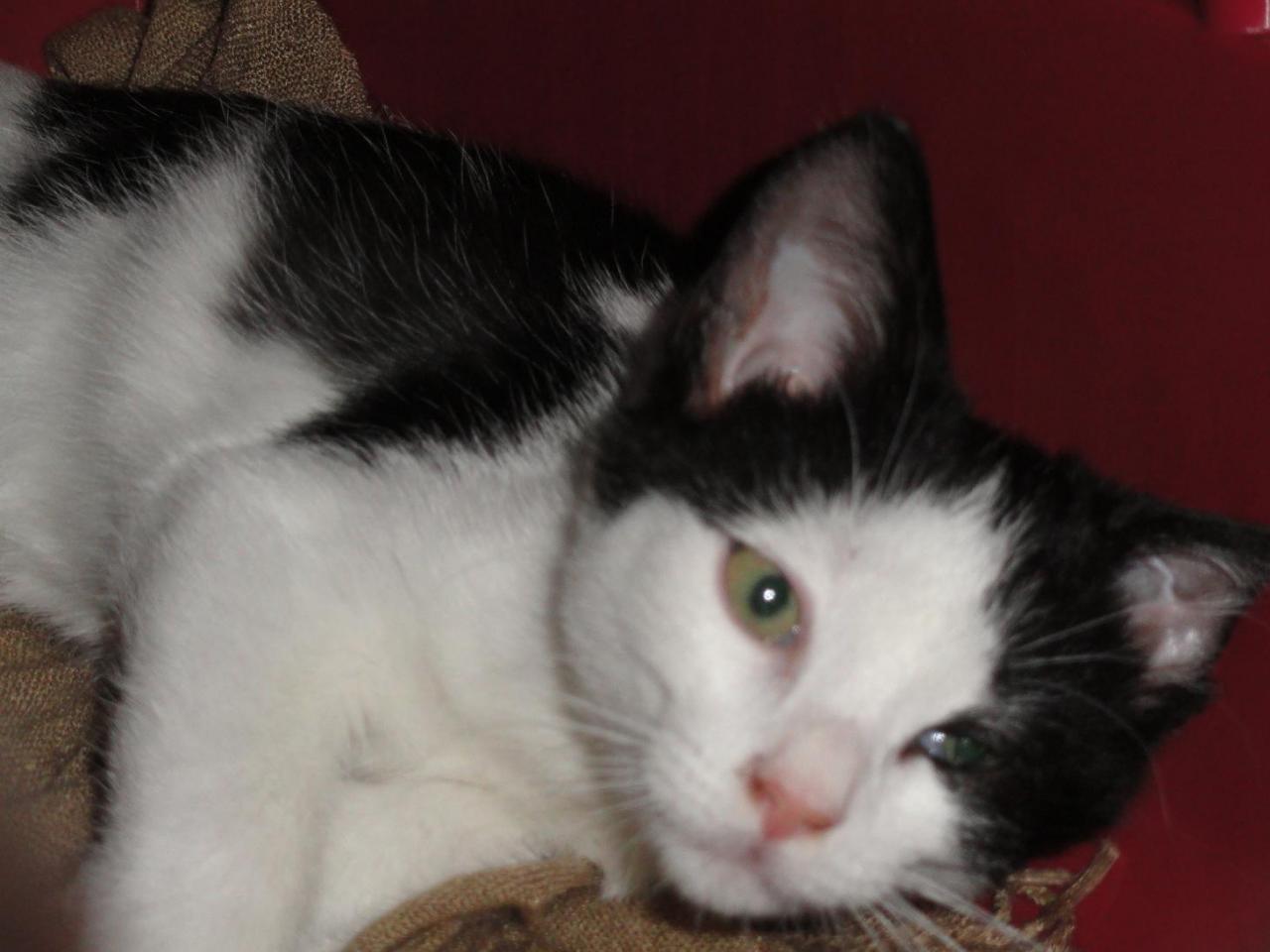 GIBBON - M - Né le 18/06/2011 - Adopté en janvier 2012