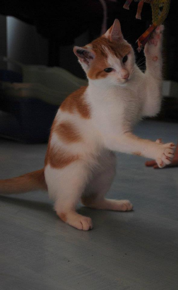 GIMINI - M -  - Adopté en Mars 2012