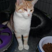 GINOU - F née le 20/05/2011 - Adoptée en Novembre 2011