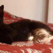 GIROFLEE - F - Né en mai 2011 - Adopté en decembre 2011
