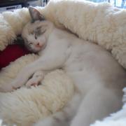 GLOOPER - Né le 14/08/2011 -Adopté en Octobre 2011