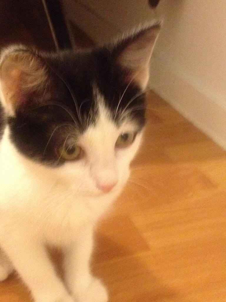 GLORIA - F - Née le - Adopté en Novembre 2011