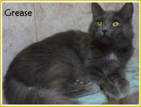 GREASE - F - Née le 01/01/2010 - Adoptée en juillet 2015