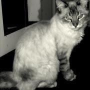 GREKO - Adopté en janvier 2012