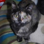 GRENOUILLE - F - Née le - Adoptée en Decembre 2011