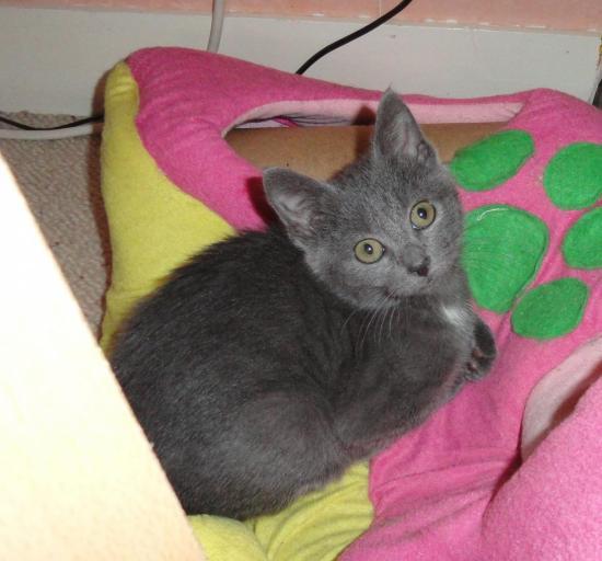 GRI-GRI - M - Né le 15/08/2011 - Adopté en Novembre 2011