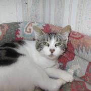 HACKET - F - Née en 07/2011 - Adoptée en Septembre 2012