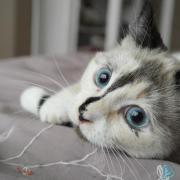 HADELAIDE - F - Née le - Adoptée en Novembre 2012