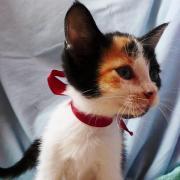 HALAIDE - F - Née le 28/03/2012 - Adoptée en Juin 2012