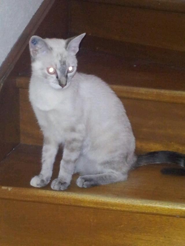 HANSA - F - Née le 10/11/2011 - Adoptée en Juillet 2012