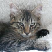 HAPOLLON - M - Né le 05/07/2012 - Adopté en Octobre 2012