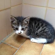 HAPHRODITE - F - Né le 05/07/2012 - Adopté en Octobre 2012