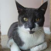 HARAMIS  - M - Né le 15/10/2011 - Adopté en Novembre 2012