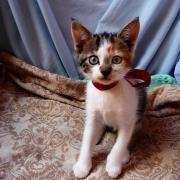 HARLINA - F - Née le 28/03/2012 - Adoptée en Juin 2012