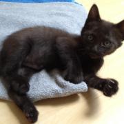 HARLINGTON - M - Né le 23/04/2012 - Adopté en Septembre 2012