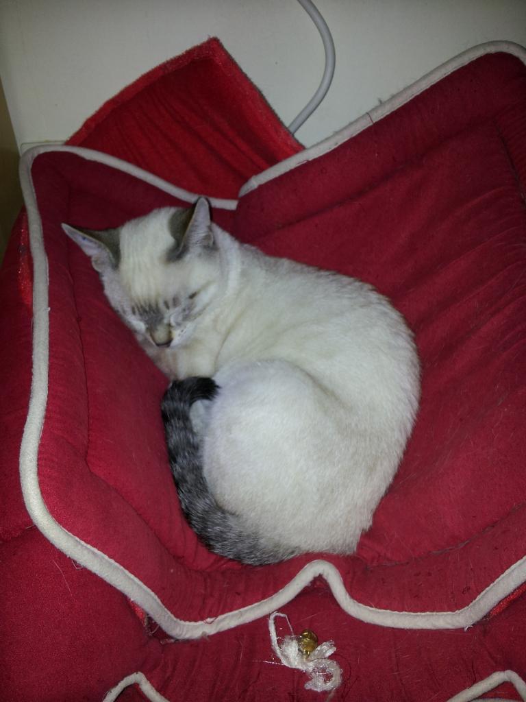 HARON - M - Né le 15/08/2012 - Adopté en Decembre 2012