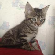 HAUREA - F - Née le 01/05/2012 - Adoptée en Aout 2012