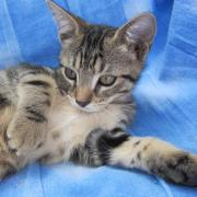 HAWKINS - M - Né le 15/07/2012 - Adopté en Decembre 2012