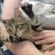 HOWL - M - Né le 10/04/2012 - Adopté en Juin 2012